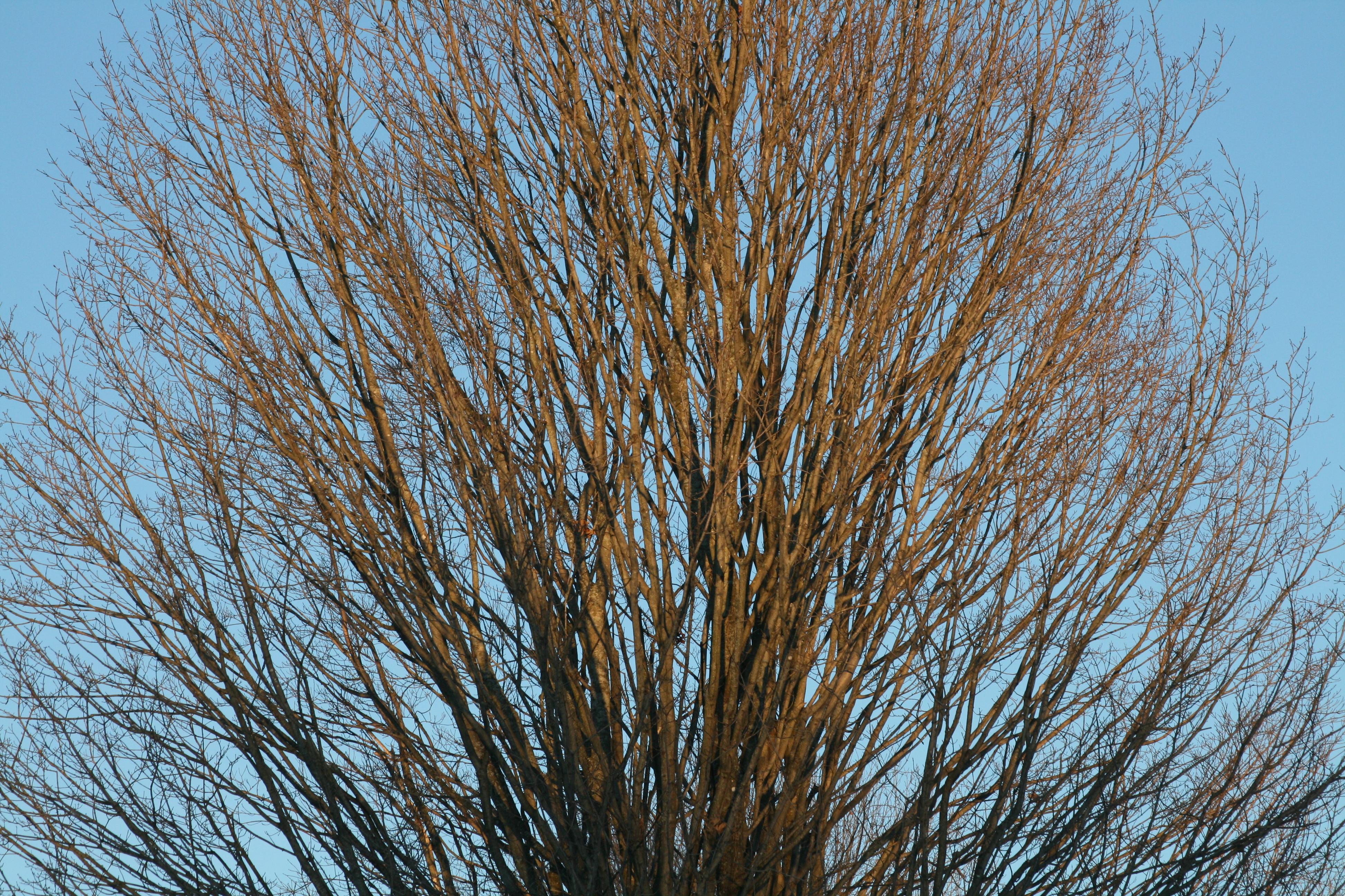 light filtering through tree